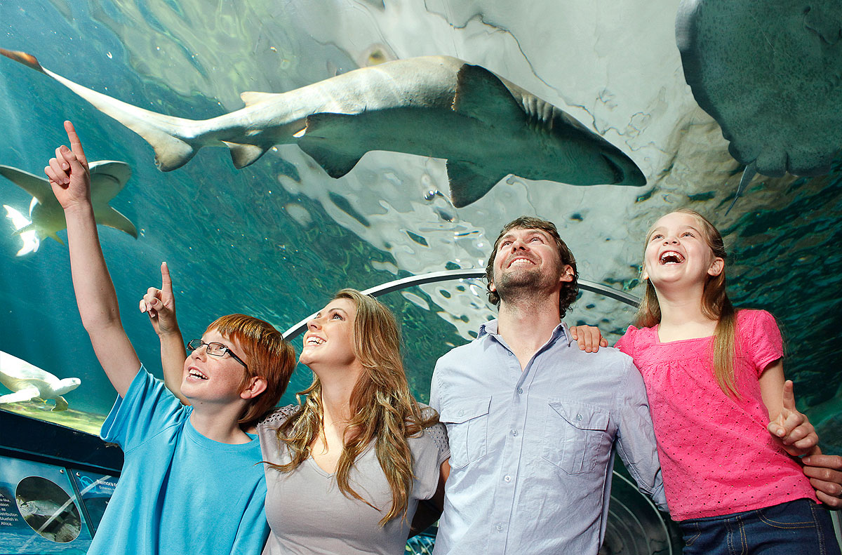 Sydney Aquarium, Sharks, Family Friendly