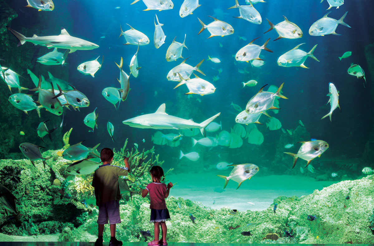 Kids at Sydney Aquarium
