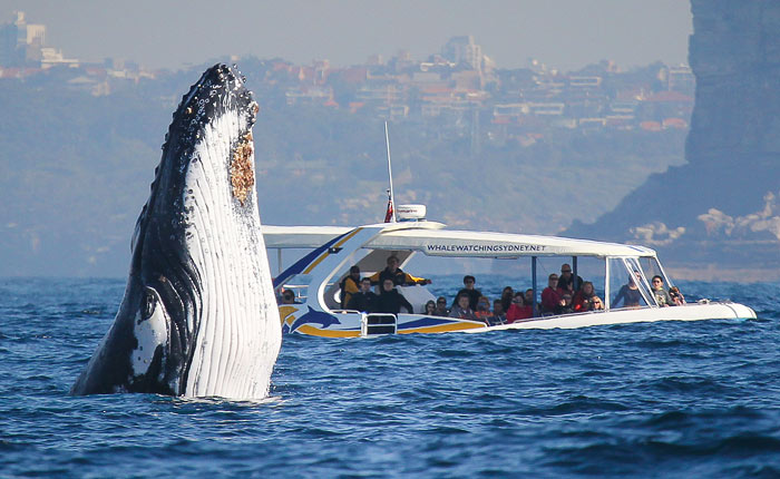 Whale Watching Sydney, 2hr Adventure Cruise