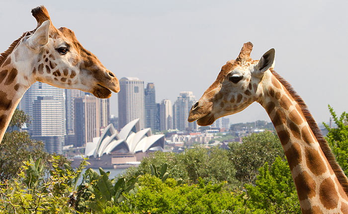 Taronga Zoo, Discounted Tickets