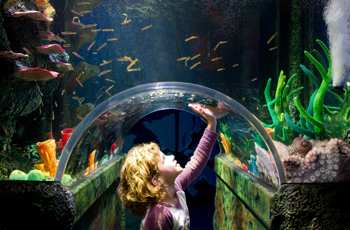 Sydney Aquarium, Fun for the whole Family