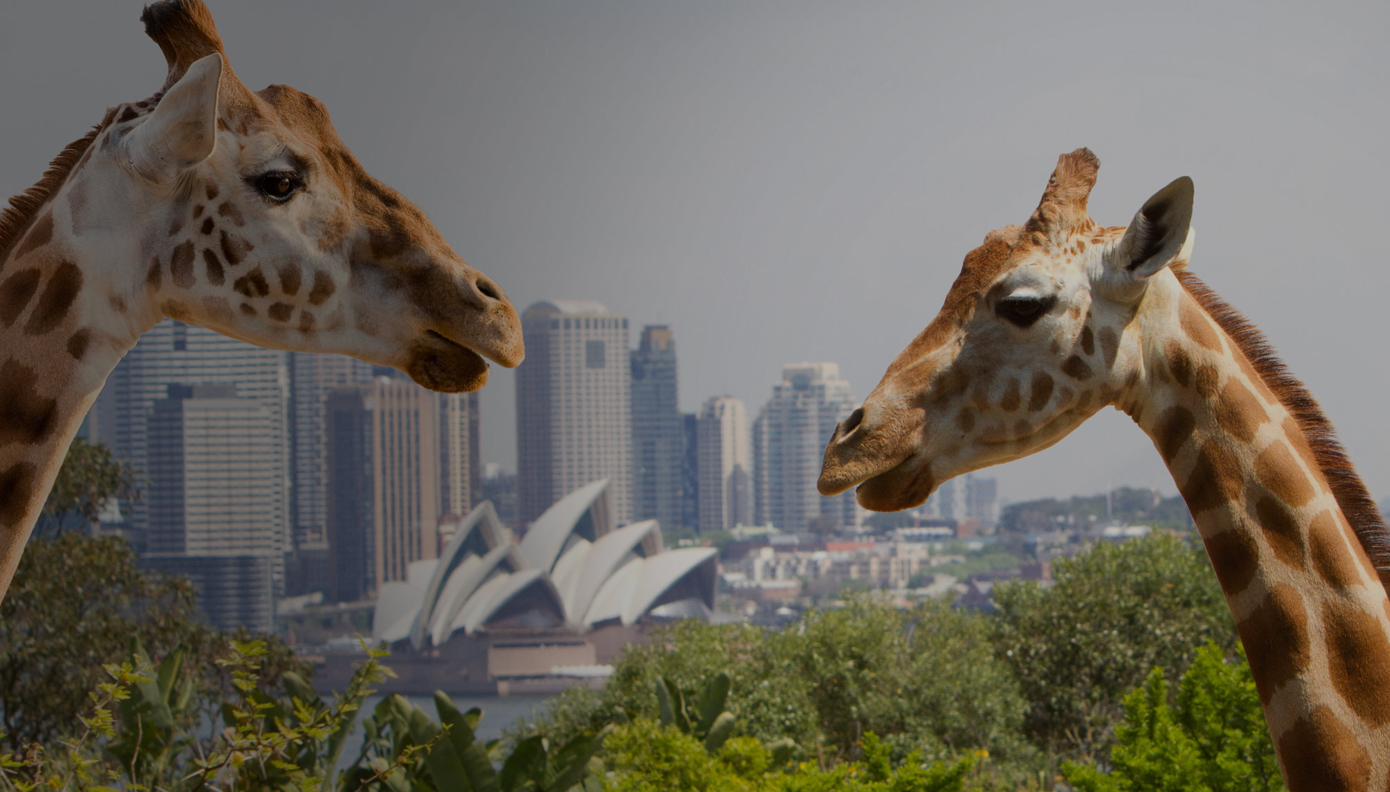 Taronga Zoo, Ferry, Discounted Tickets