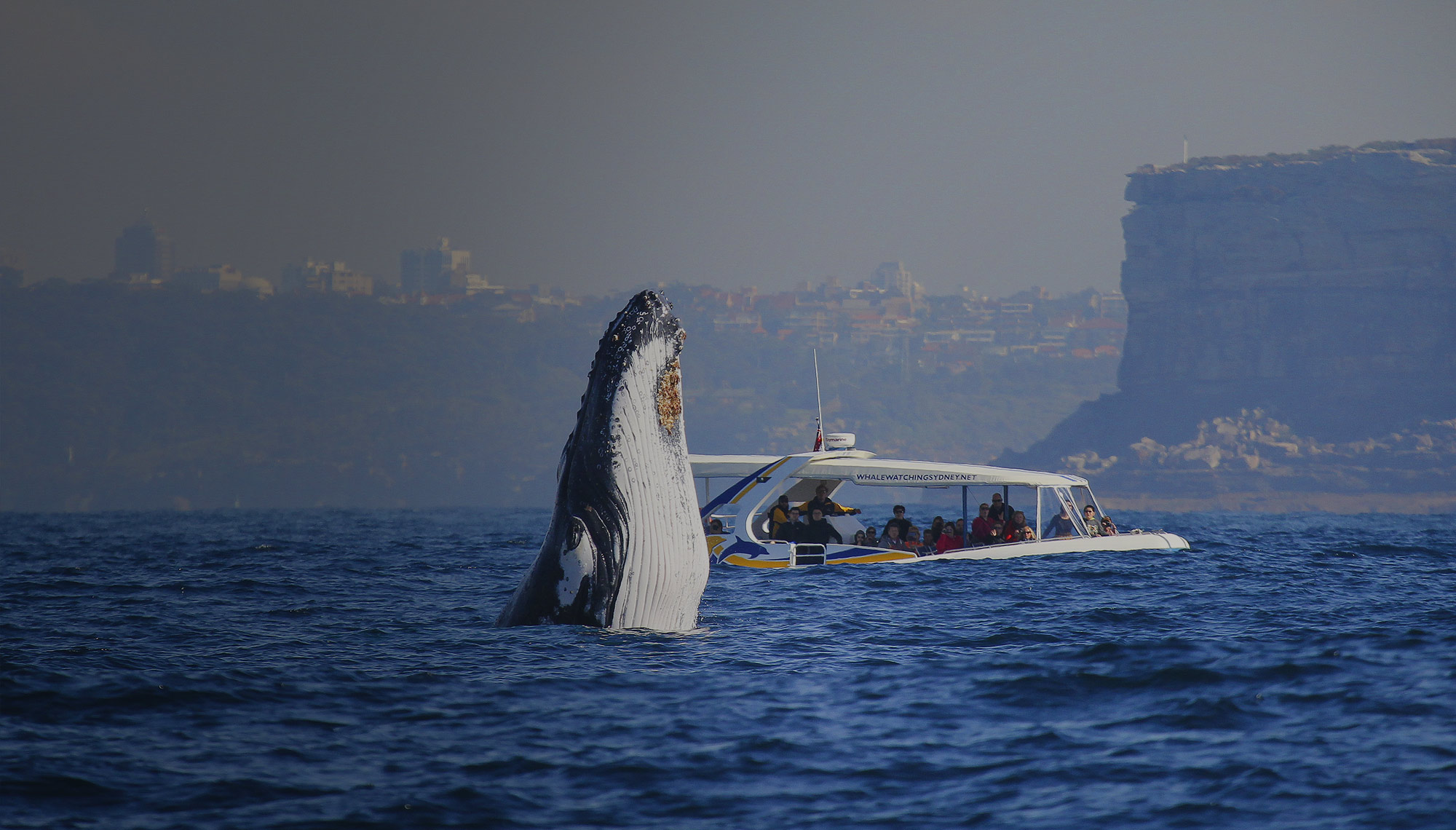 Whale Watching Sydney, Daily Cruises