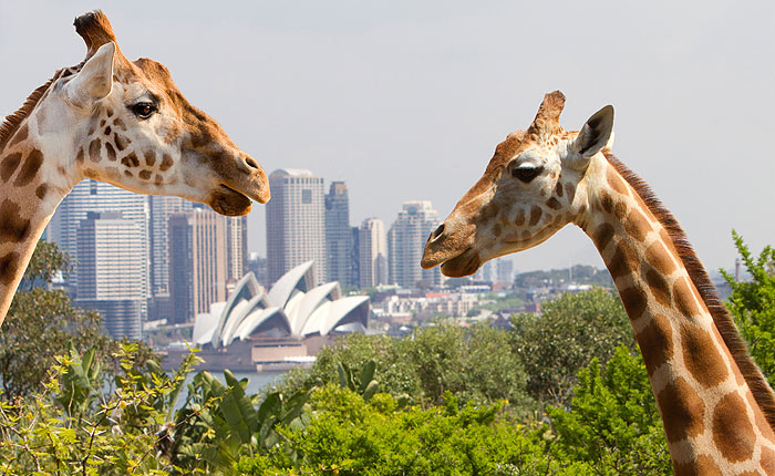 Taronga Zoo, Ferry, Combo Pass, Sydney Harbour Cruise