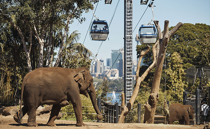 Taronga Zoo, Ferry, Discount Tickets